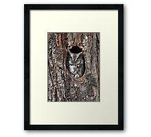 Grey Morph / Screech Owl Framed Print
