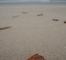 The Leaves beneath my feet by LPphotography