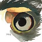 Eagle's Eye by Sally Griffin