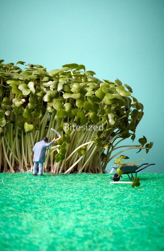Cress garden by Bitesized