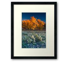 First Light Of Fall Framed Print