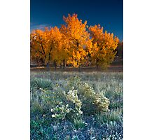 First Light Of Fall Photographic Print