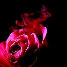 Rose by DoreenPhillips