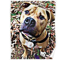 Pit Bull Rescue Beauty (1) Poster