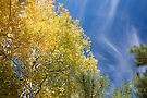 Aspens and Blue Sky by William C. Gladish