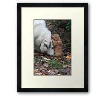 Budding Friendship Framed Print