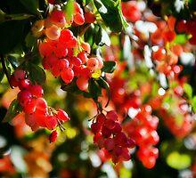 Winter Berries by Susie Peek
