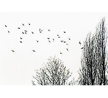 Il Volo Photographic Print