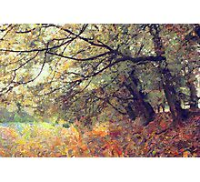 autumn trees Photographic Print