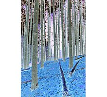 Blue Grass Photographic Print