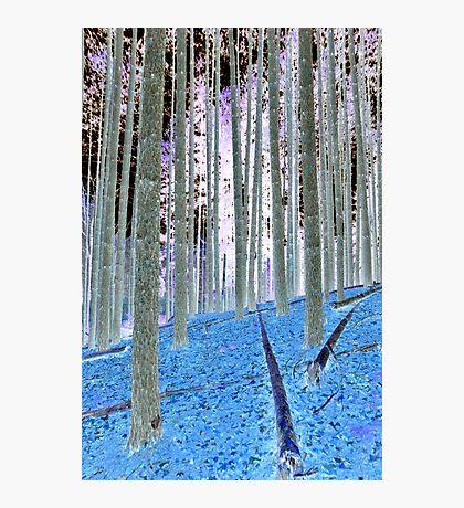 Blue Grass Photographic Print