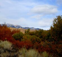 Fall Colors In The Desert by marilyn diaz