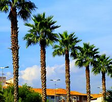 The Palm Trees Of Antibes by Fara
