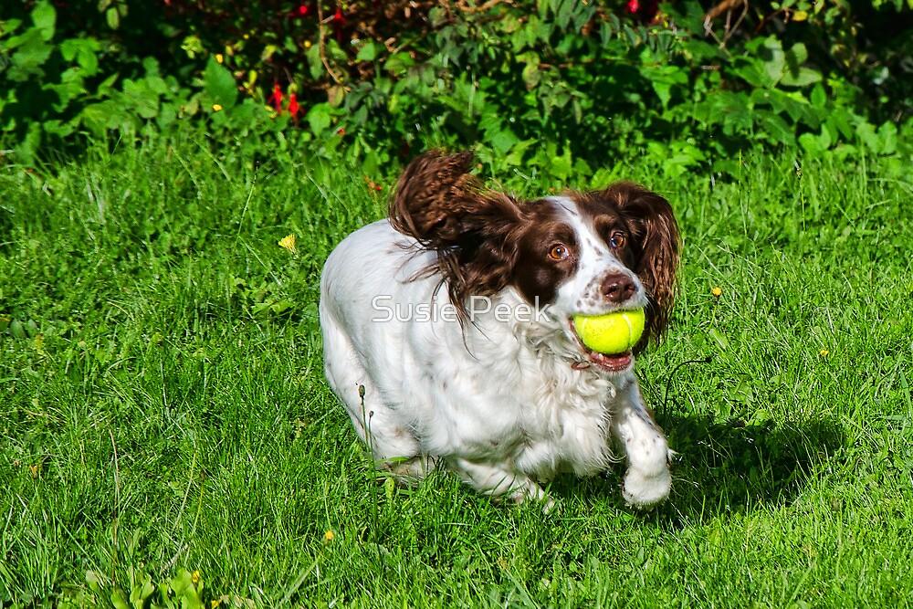 Fetch! by Susie Peek