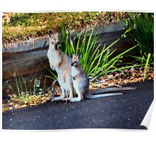 Wallaby and Joey Poster