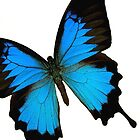 Blue Butterfly by TinaGraphics