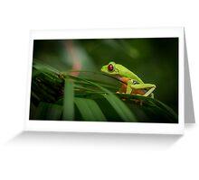 Costa Rican Red Eye Tree Frog Greeting Card