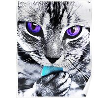 Purple eyes Cat Poster