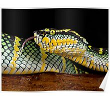 Waglers pit viper Poster