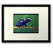 Blue dartfrog Framed Print