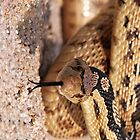 Brown Snake by TinaGraphics
