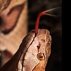 Snake by TinaGraphics