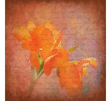 Peach Dream Photographic Print
