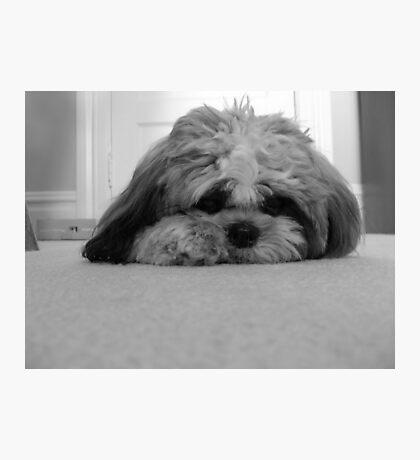 Shadow the Dog Photographic Print