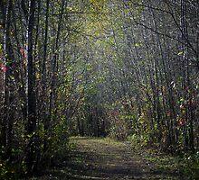 The Path by Sheri Bawtinheimer
