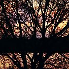 Sundown Tree by NiaTakesPhotos