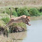 Jumping Lioness 2 by Bernie Rosser