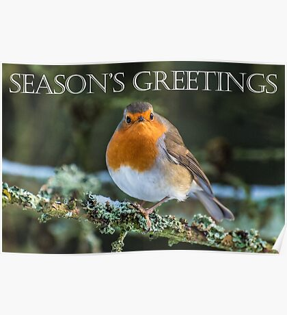 Season's Greetings Robin Poster