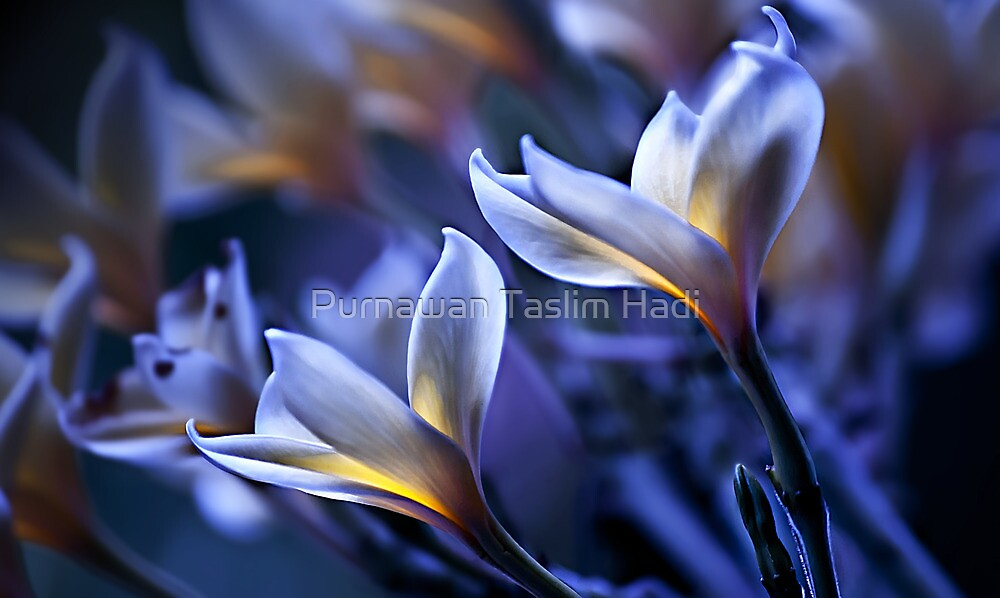 In Blue by Purnawan Taslim Hadi
