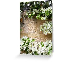 White Bougainvillea 01 11 12 Greeting Card