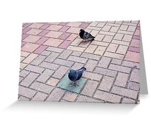 Pigeon Two 02 11 12 Greeting Card