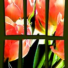 Tulips  by Janys Hyde