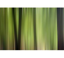 Abstract Trees in the Forest Photographic Print