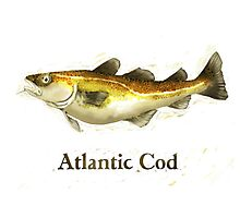 Atlantic Cod Painting Photographic Print