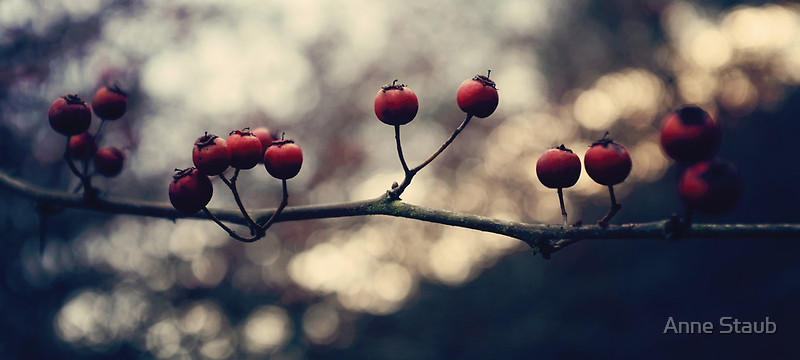 Un hiver ~ II by Anne Staub