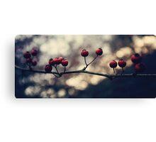 Un hiver ~ II Canvas Print