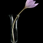 Colchicum in water by Bruce Walker
