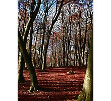 Grass woods in Autumn Photographic Print