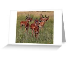 Impala, Zambia Greeting Card