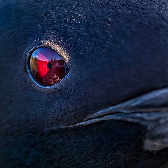 A Loon's Eye View by Daniel  Parent