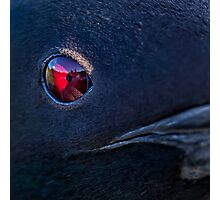A Loon's Eye View Photographic Print