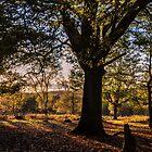 Autumn Glow by JEZ22