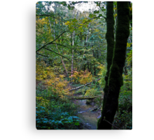 fall rains Canvas Print