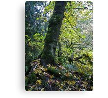 momentary pause Canvas Print