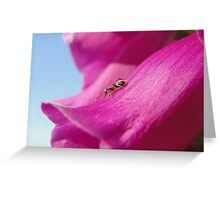 Anton the Ant On Foxglove Greeting Card