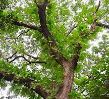 The old tree by arjurahman